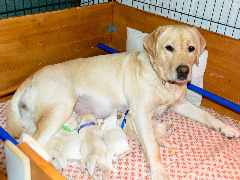 Ivy met haar puppies